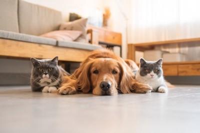 二匹の猫に挟まれる犬