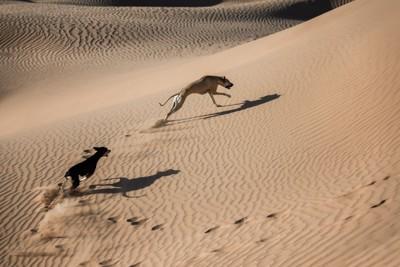 砂漠を駆けるスルーギ