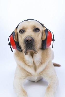 ヘッドホンをしている犬