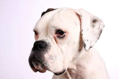 どことなく不安そうな犬