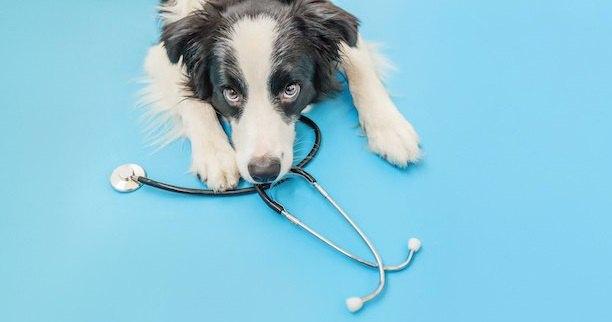 聴診器とこちらを見上げる犬
