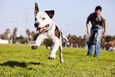芝生を元気よく走る犬