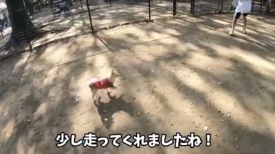 走ってる犬