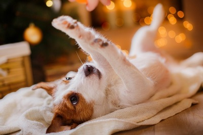 寝転がり、手を上に上げている犬