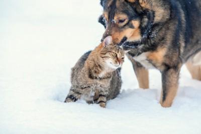 雪の中で寄り添う猫と犬