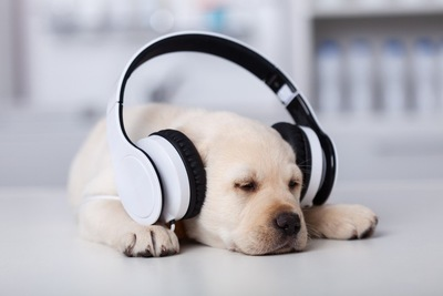 ヘッドフォンした犬