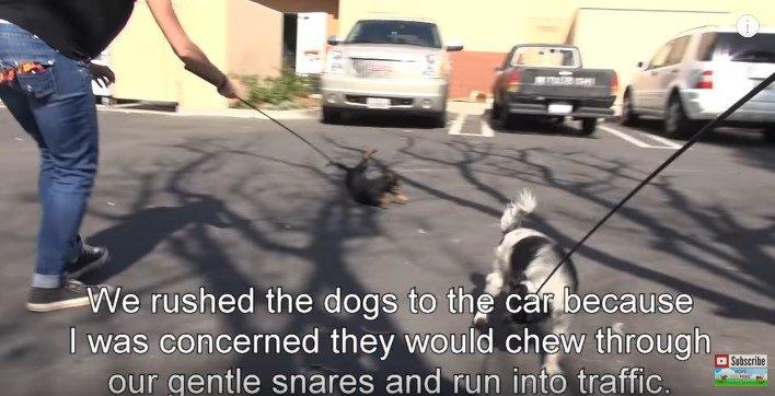暴れながら歩く犬