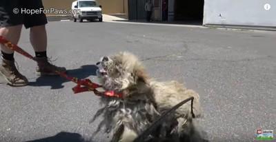 赤いひもをかけられた犬