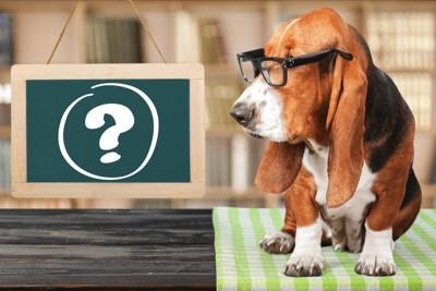 クエスチョンマークのかかれた黒板を見る犬