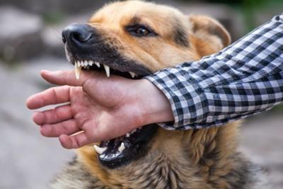 手を噛む犬