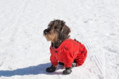 靴を履いた犬