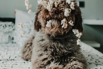 ポップコーンと犬の写真