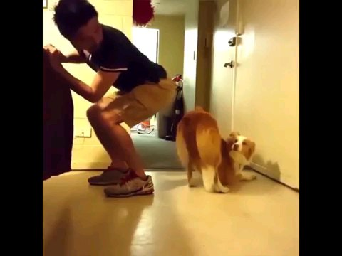人とお尻を合わせる犬