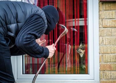 ドアから覗く泥棒と犬