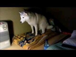 毛布に乗る犬