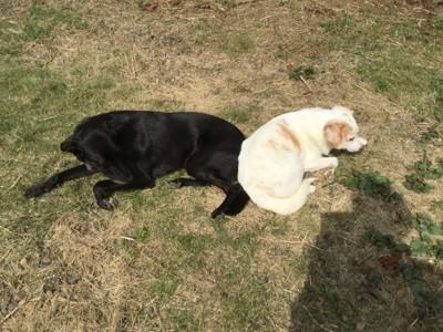 犬2頭の写真