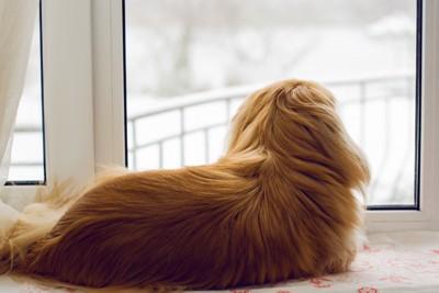 窓辺で外の雪を眺める犬の後ろ姿