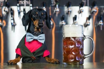 ビールサーバーの前のダックスフンドとビール