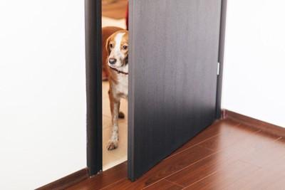 少し開いたドアの向こうを見ている犬