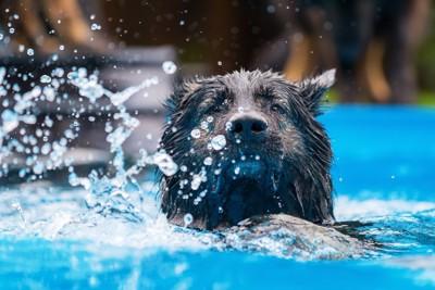 水しぶきを上げて泳ぐ犬