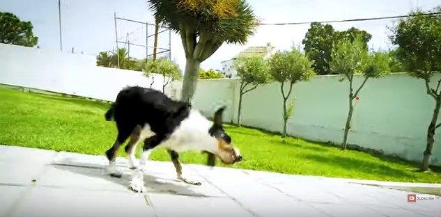 体を震わせる犬