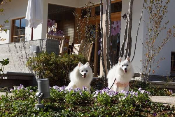 植栽の前に犬