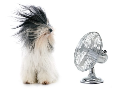 扇風機にあたる長い毛の犬