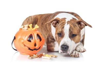 ハロウィンのおやつと犬