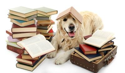 本に埋もれる犬