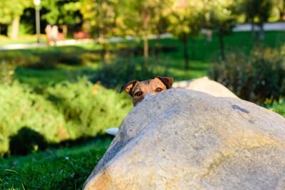 岩陰から覗く犬