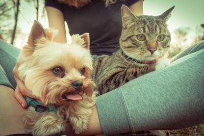 飼い主の足に座る犬