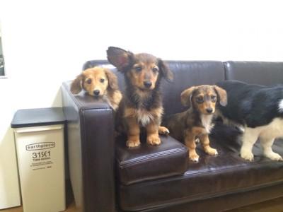 犬6匹のママの投稿画像