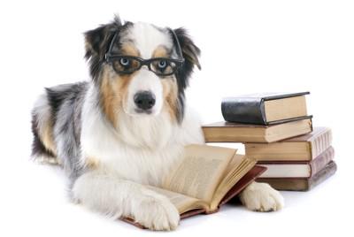 メガネをかけた犬と積まれた本