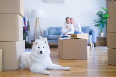 白い犬と段ボール