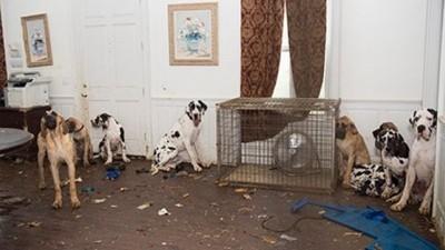 ケージの周りにいる犬達