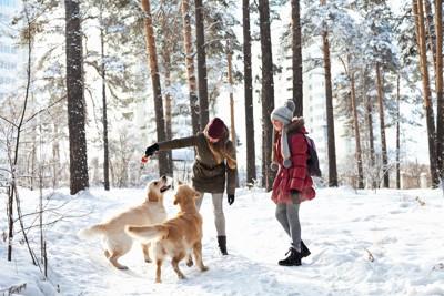 雪の中で遊ぶ女性と犬
