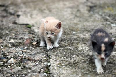 捨てられた子猫たち