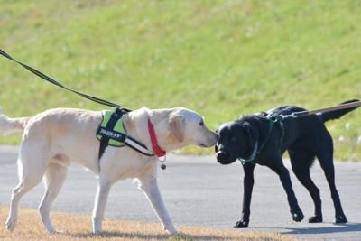 二匹の大型犬