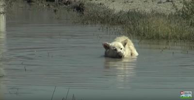水に体を浸す犬