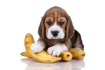 バナナと子犬