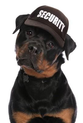 キャップ帽かぶった犬1