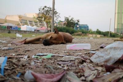ゴミの中で横たわる犬