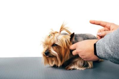 叱られて不満そうな犬