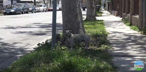 木陰で休む2匹