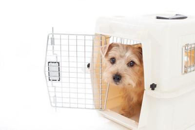 キャリーケースに入る犬
