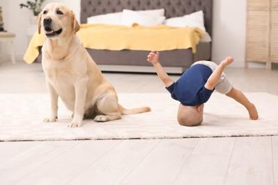 ラブラドールと床に頭をつけて遊ぶ子供