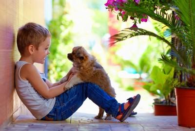向き合っている子犬と男の子