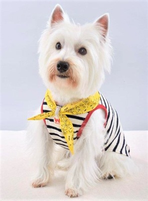 WHCYの犬服