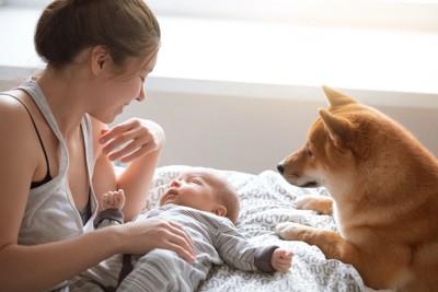 赤ちゃんの世話をする母親と赤ちゃんを見つめる柴犬