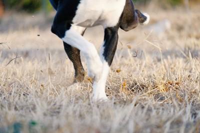 枯れ草の地面を蹴っている犬の手足のアップ